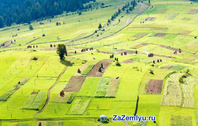 Земельный пай в наследство: срок давности, вступление в наследство