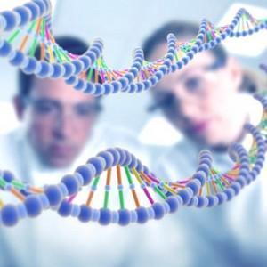 Как определить отцовство по группе крови точность результатов и таблица